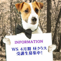 info_dog_WS_boshu_201804